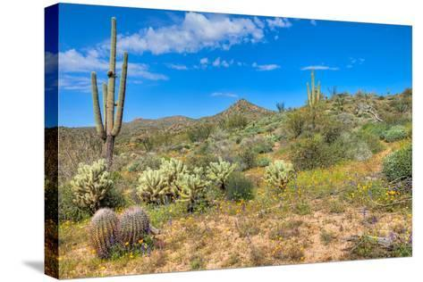 Blooming Desert-Anton Foltin-Stretched Canvas Print