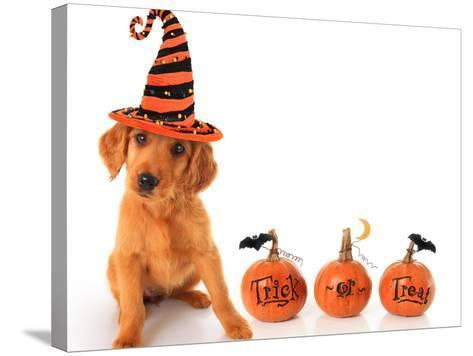 Cute Puppy Wearing a Halloween Witch Hat with Pumpkins-Hannamariah-Stretched Canvas Print