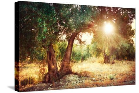Mediterranean Olive Field with Old Olive Tree-Subbotina Anna-Stretched Canvas Print