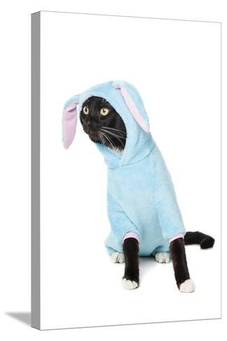 Black Cat in a Bunny Suit-vivienstock-Stretched Canvas Print