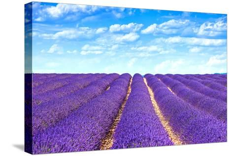 Lavender Flower Blooming Fields Endless Rows-stevanzz-Stretched Canvas Print