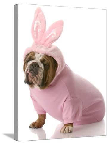 Dog Dressed Up as Easter Bunny-Willee Cole-Stretched Canvas Print