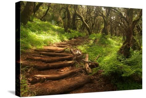 Forest Stairs--Stretched Canvas Print