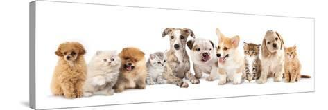 Group of Puppies and  Kitten of Different Breeds, Cat and Dog-Lilun-Stretched Canvas Print