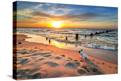 French Bulldog on the Beach at Sunset-Patryk Kosmider-Stretched Canvas Print