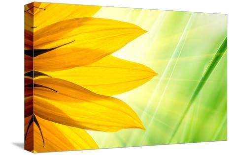 Sunflower Flower over over Green Floral Background-logoboom-Stretched Canvas Print