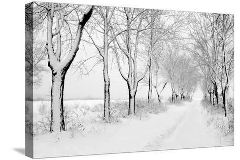 Rows of Snowbound Trees in the Park-pavel klimenko-Stretched Canvas Print