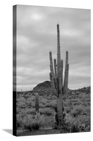 Desert Storm-diomedes66-Stretched Canvas Print