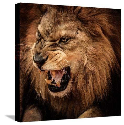 Close-Up Shot of Roaring Lion-NejroN Photo-Stretched Canvas Print