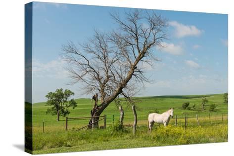 Horse-Hank Shiffman-Stretched Canvas Print