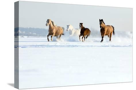Herd of Horses in Winter-Alexia Khruscheva-Stretched Canvas Print