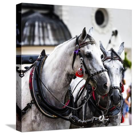 Horses and Carts on the Market in Krakow, Poland.-Curioso Travel Photography-Stretched Canvas Print