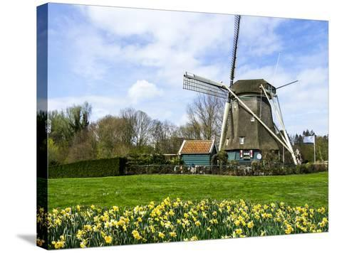Traditional Dutch Windmill with Daffodils Field Nearby, the Netherlands-Tetyanka-Stretched Canvas Print