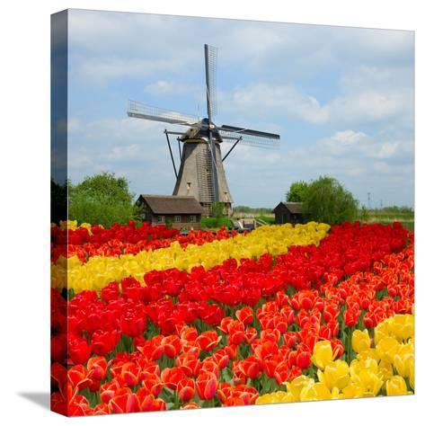 Dutch Windmill over Tulips Field-neirfy-Stretched Canvas Print