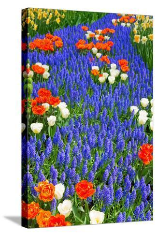 Blue River of Muscari Flowers in Holland Garden-neirfy-Stretched Canvas Print