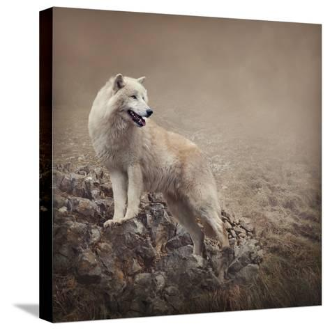 White Wolf at the Night-egal-Stretched Canvas Print