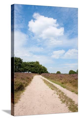 Landscape with Sand Path Purple Heath Fields in Summer-Ivonnewierink-Stretched Canvas Print