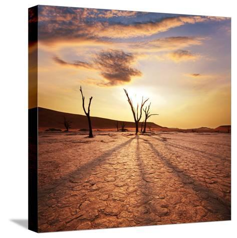 Dead Valley in Namibia-Andrushko Galyna-Stretched Canvas Print
