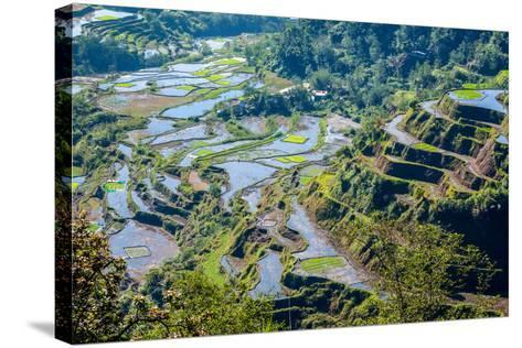 Rice-Terraces of Banaue- Rangzen-Stretched Canvas Print