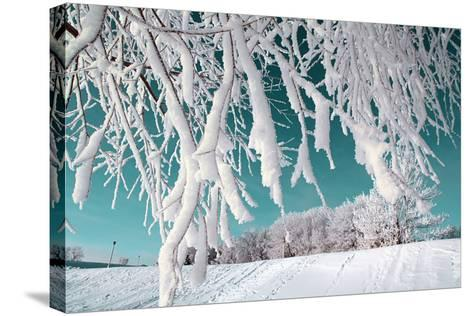Tree in Snow on Celestial Background-basel101658-Stretched Canvas Print