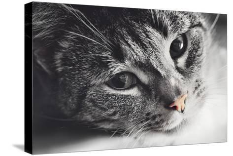 Cute Cat Lying in Lazy, Sleepy Pose Looking at the Camera with its Magnetic Eyes. close Portrait. B-Michal Bednarek-Stretched Canvas Print
