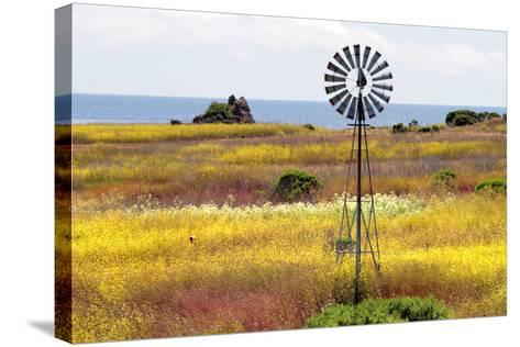 California's Central Coast, Big Sur, USA-coleong-Stretched Canvas Print