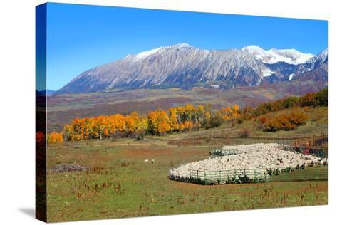 Sheep Farm near Kebler Pass in Colorado-SNEHITDESIGN-Stretched Canvas Print