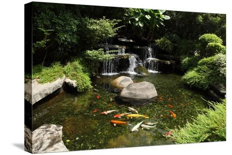 Japanese Variegated Carps Swimming in Garden Pond-eskay lim-Stretched Canvas Print