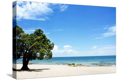 Mango Tree on the Beach on a Sunny Day, Chintheche Beach, Lake Malawi, Africa-Yolanda387-Stretched Canvas Print