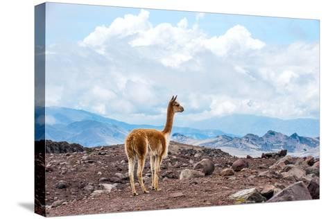Andes of Central Ecuador-xura-Stretched Canvas Print