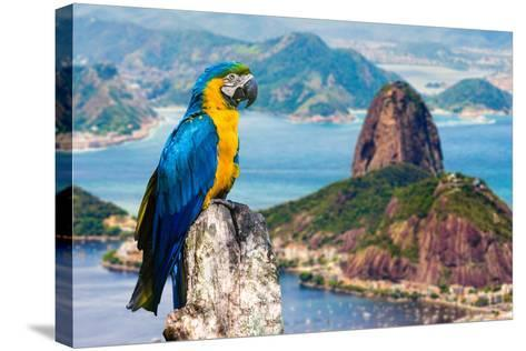 Blue and Yellow Macaw in Rio De Janeiro, Brazil-Frazao-Stretched Canvas Print