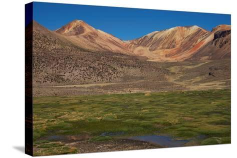 Wetland in the Atacama-JeremyRichards-Stretched Canvas Print