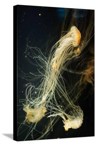 Jellyfish in the Ocean-alexandros33-Stretched Canvas Print