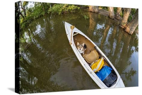 Corgi Dog in a Decked Expedition Canoe on a Lake in Colorado, a Distorted Wide Angle Fisheye Lens P-PixelsAway-Stretched Canvas Print
