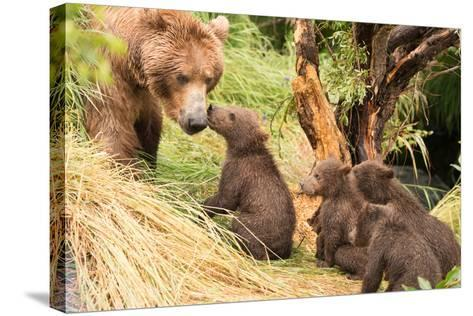 Four Bear Cubs Greet Mother beside Tree-Nick Dale-Stretched Canvas Print
