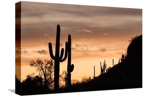 Saguaro Cactus-wollertz-Stretched Canvas Print