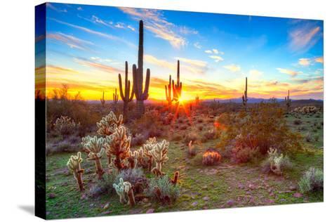 Sonoran Desert-Anton Foltin-Stretched Canvas Print