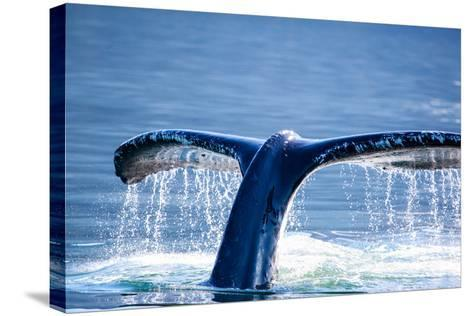 Humpback Whale Tail-JHVEPhoto-Stretched Canvas Print