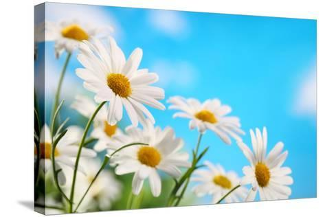 Daisy Flower against Blue Sky-Liang Zhang-Stretched Canvas Print