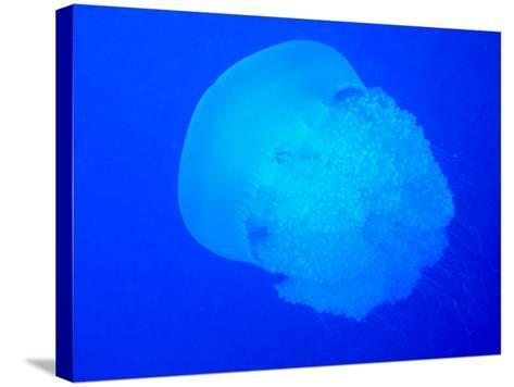 Giant Jellyfish-tonguy324-Stretched Canvas Print