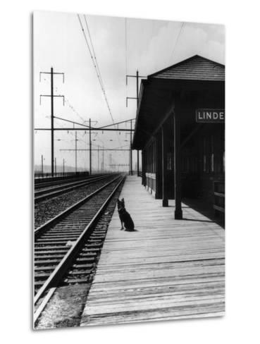 Dog Waiting at Empty Railroad Platform--Metal Print