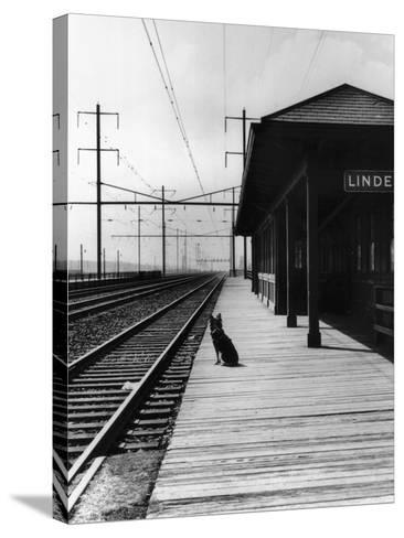 Dog Waiting at Empty Railroad Platform--Stretched Canvas Print
