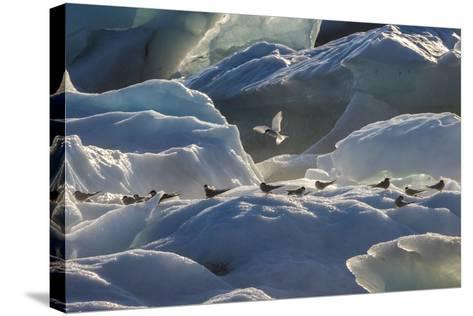 Iceland 6-Art Wolfe-Stretched Canvas Print