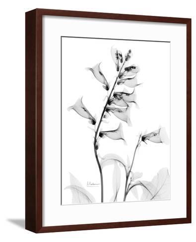 Foxglove Gray-Albert Koetsier-Framed Art Print