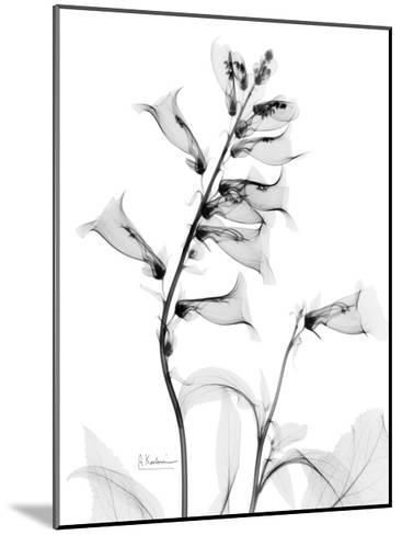 Foxglove Gray-Albert Koetsier-Mounted Premium Giclee Print