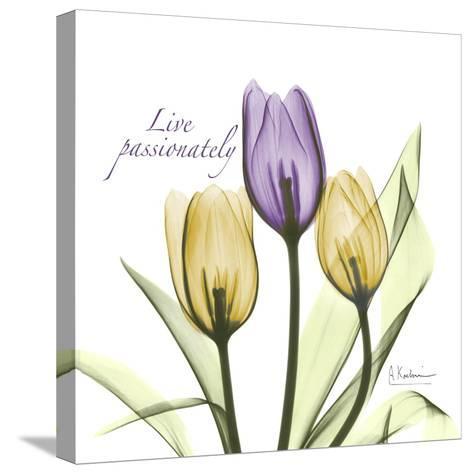 Passionately Tulip-Albert Koetsier-Stretched Canvas Print