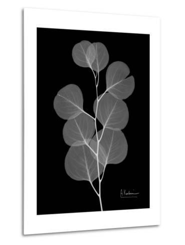 Eucalyptus E196-Albert Koetsier-Metal Print
