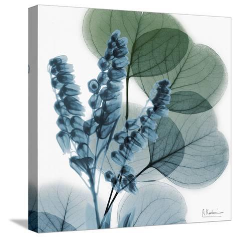 Lilly Of Eucalyptus-Albert Koetsier-Stretched Canvas Print