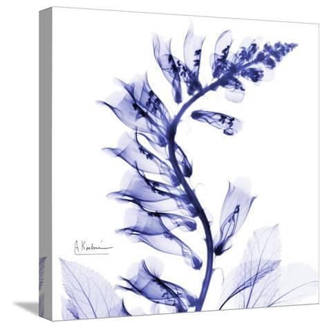 Navy Foxglove-Albert Koetsier-Stretched Canvas Print