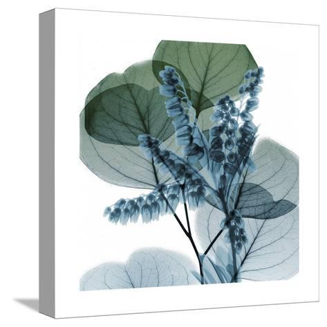 Lilly Of Eucalyptus 2-Albert Koetsier-Stretched Canvas Print